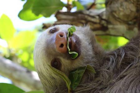 Sloth-sactuary5